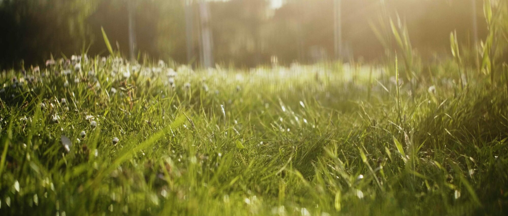 Wie du deinen Rasen diesen Sommer in Topform hältst