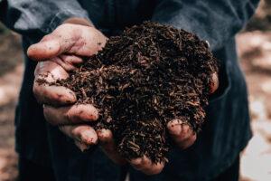 Rasendungen Erde