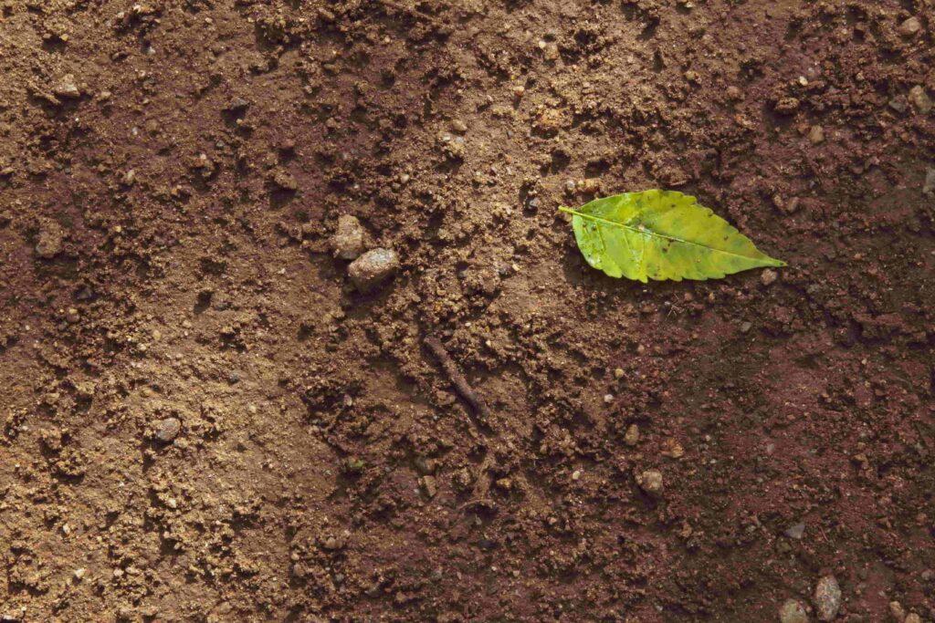 Mittelschwerer Boden ist leicht sandig und recht fest