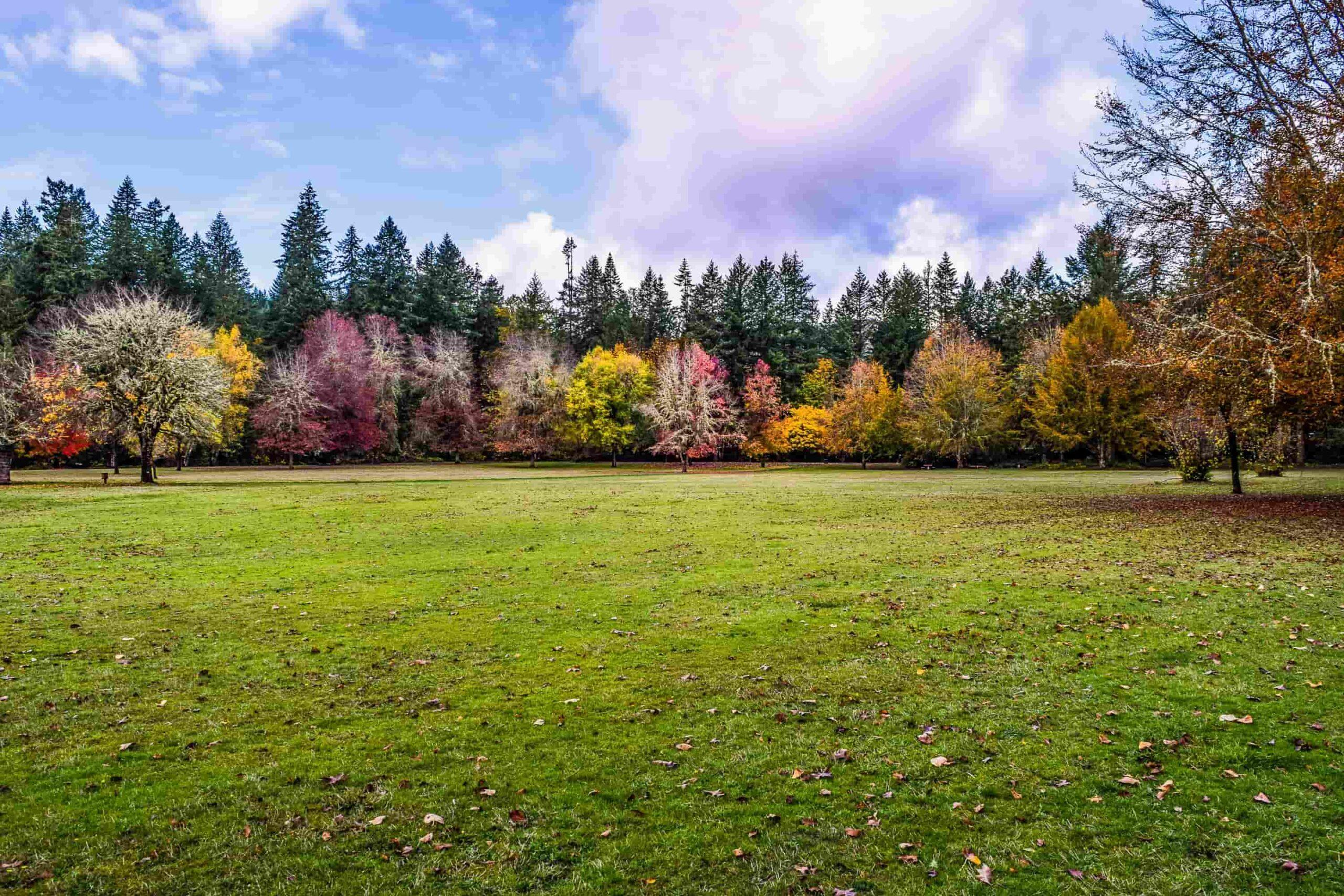 Rasenpflege im Herbst von Vertikutieren bis Mähen