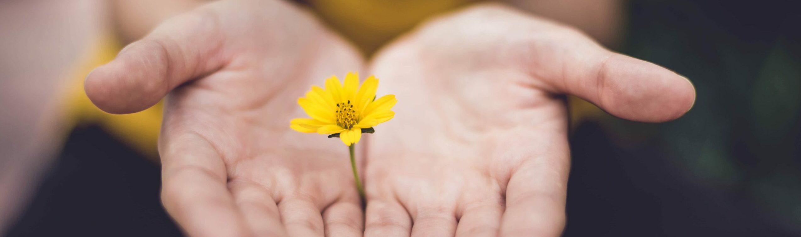 Die 10 besten Geschenkideen für Gartenliebhaber