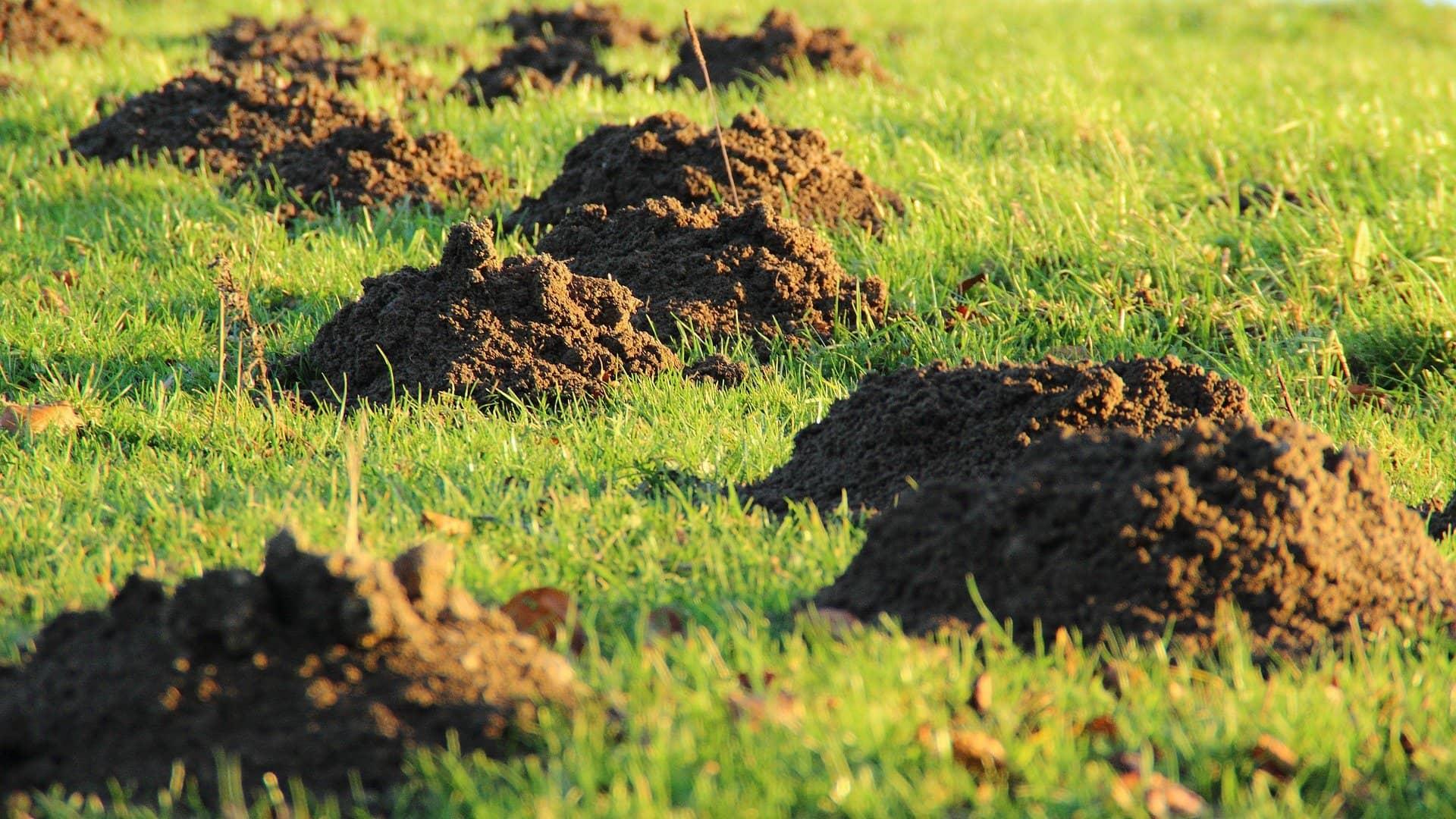 Maulwurf vertreiben – So bleibt dein Garten hügelfrei